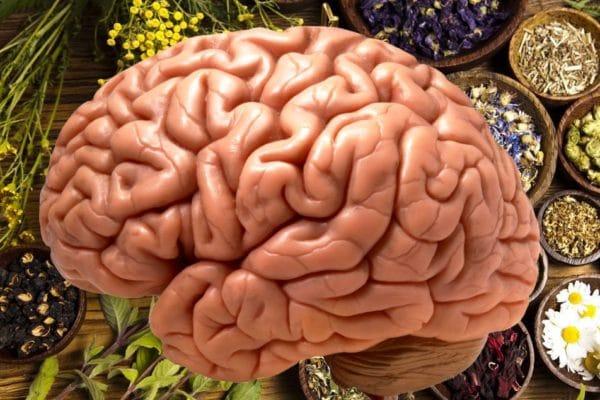 byliny a mozek
