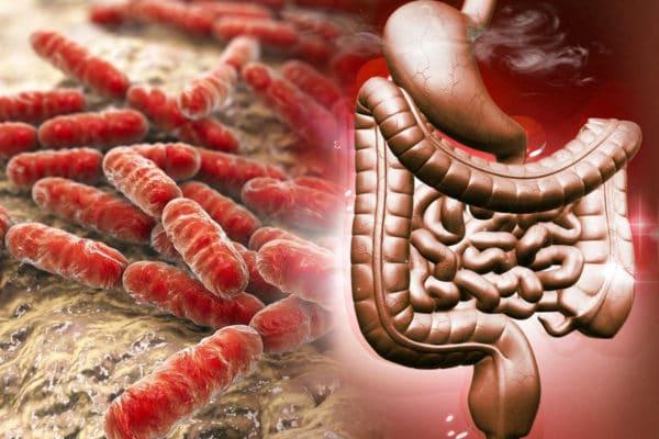 bifidobakterie