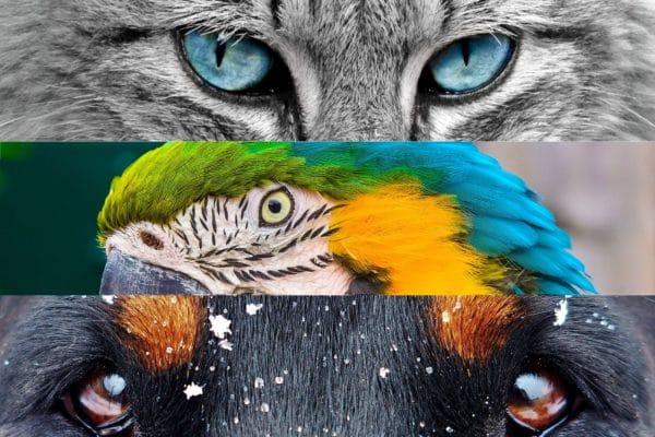 kočka, papoušek, pes