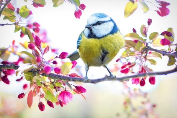 Některé druhy ptactva mění své zvyky kvůli změně klimatu