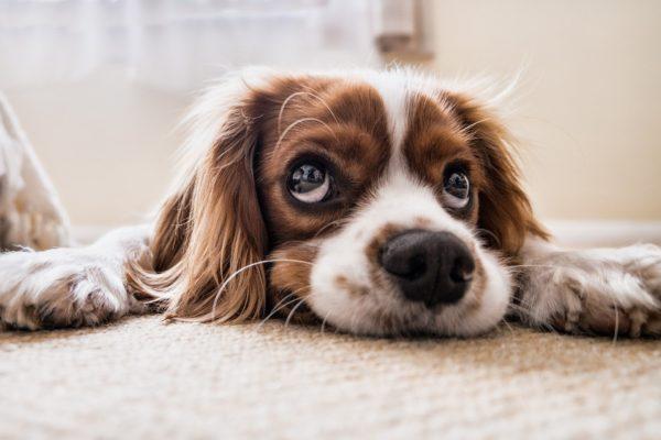 Čas strávený se psy prodlužuje život