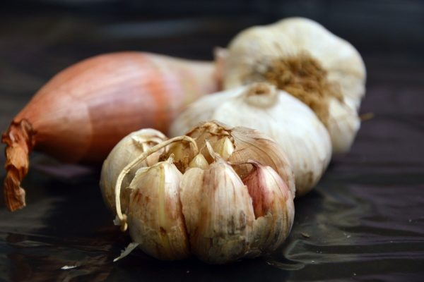 Cibule a česnek