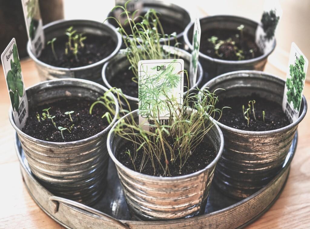 Domácí pěstování bylinek