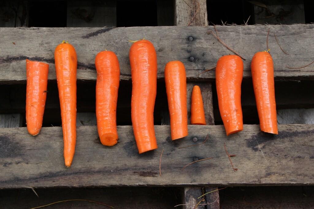 hubnutí pomocí paleo diety