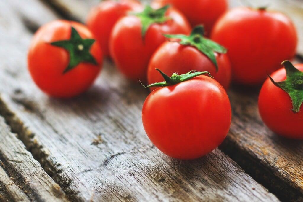 pěstování rajčat doma