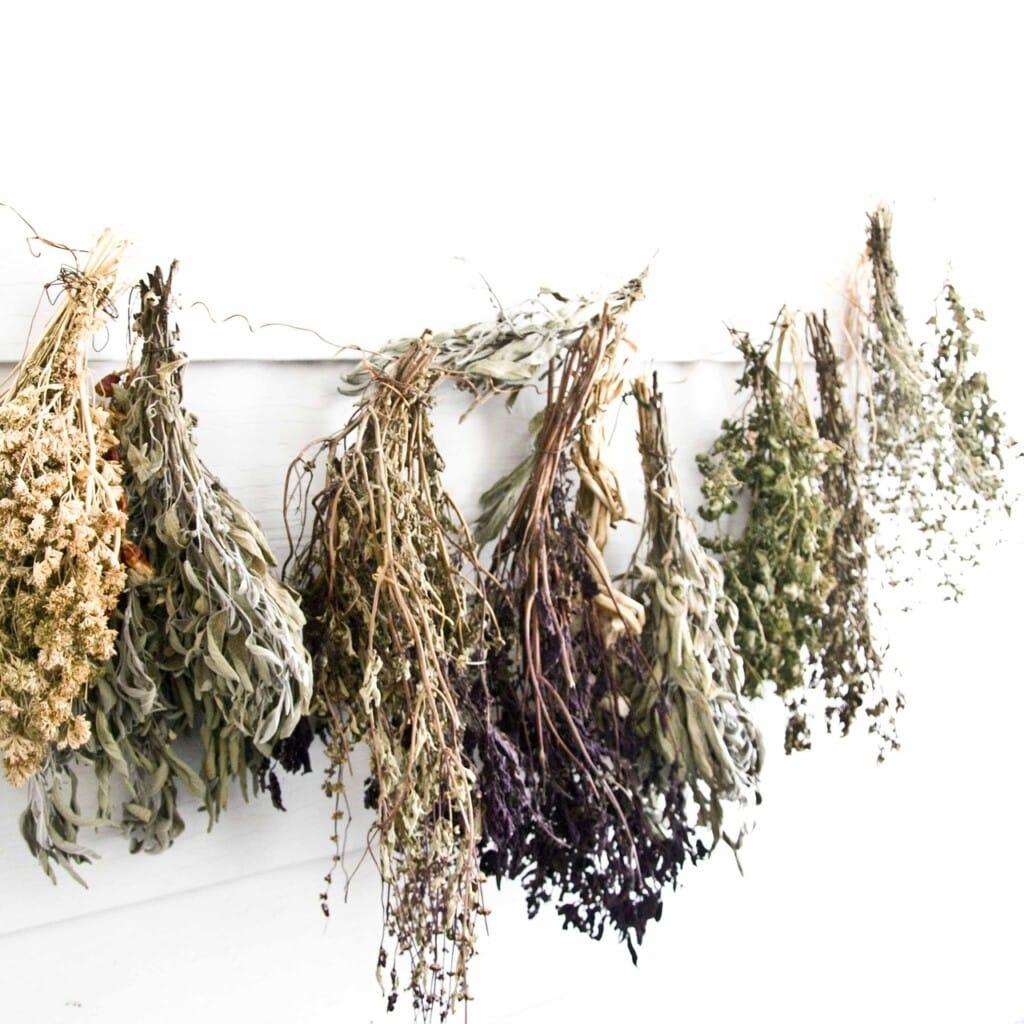 Sušené bylinky pověšené na provaze.